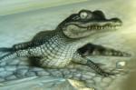 Аэрография на крыле  Шкоды Октавия. Крокодил